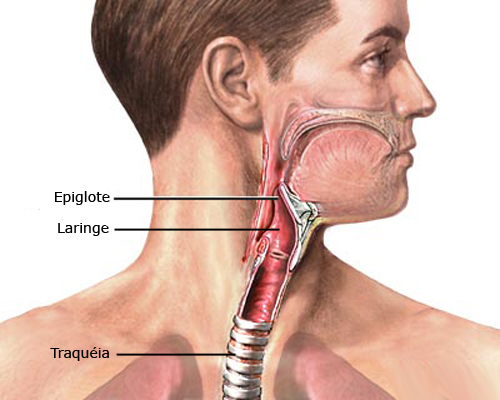Laringe - Sistema Respiratório | Anatomia Humana