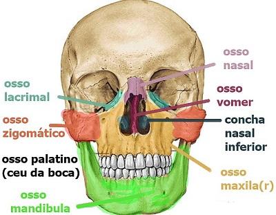 ossos-da-face