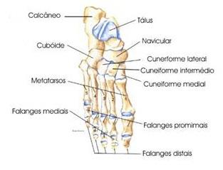 ossos-dos-pés