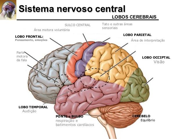 sistema-nervoso-central
