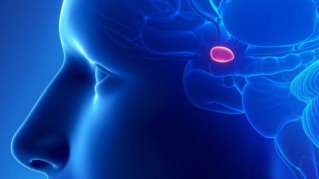 Glândula Pineal ou Epífise