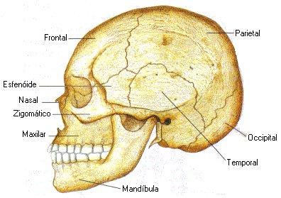 Maxilar (mandíbula)