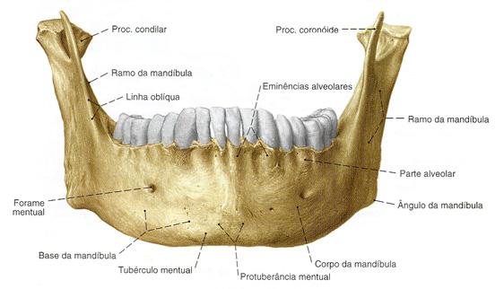 Maxilar mandibula