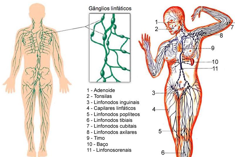 vasos-do-sistema-linfatico