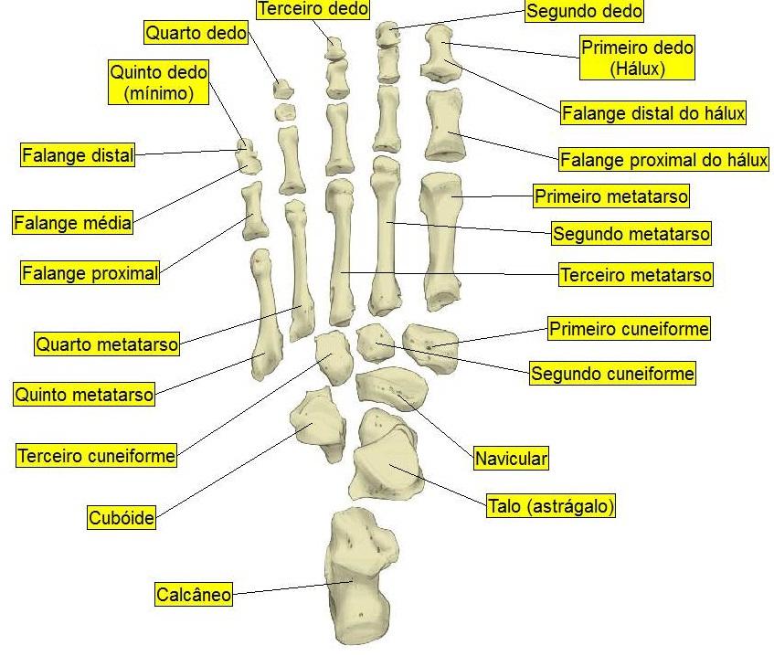 Quantos Ossos Tem O Pé Quais São Anatomia Dos Pés Humanos